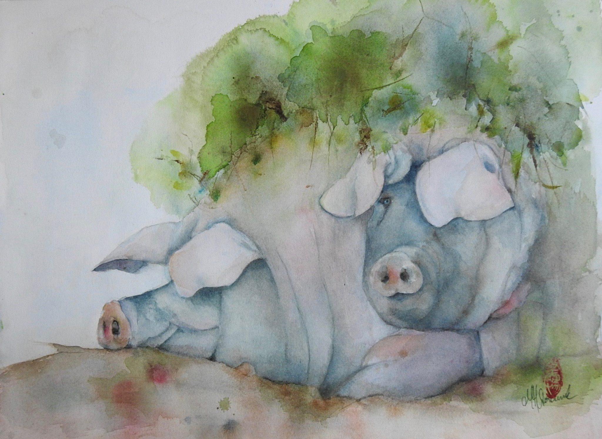 Les Cochons cul noir Limousin - 60x46 cm