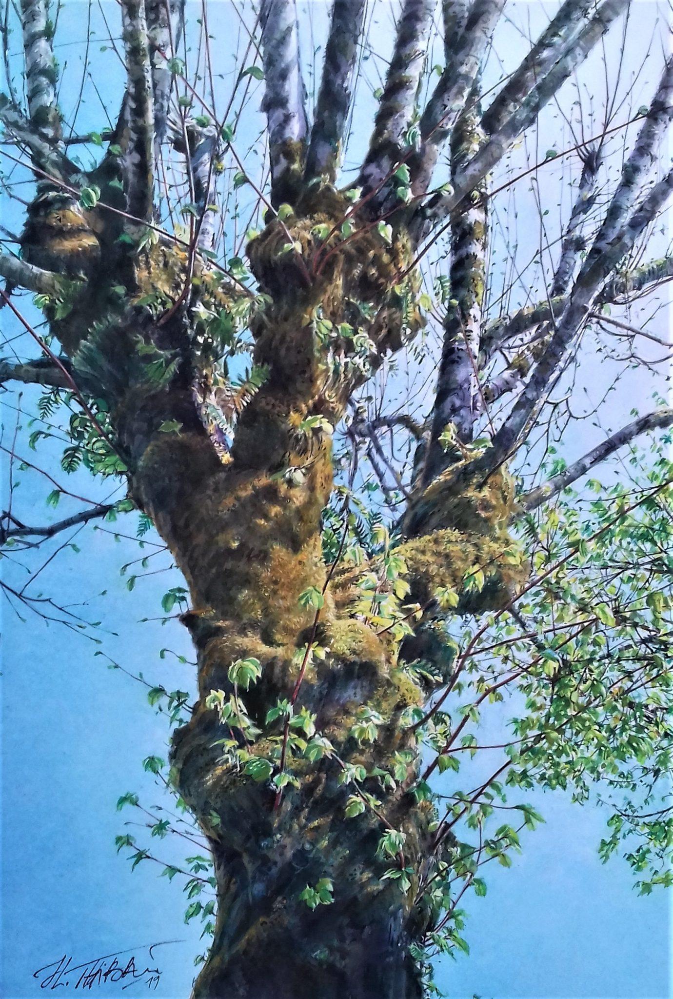 L'arbre moussu - 32x46cm