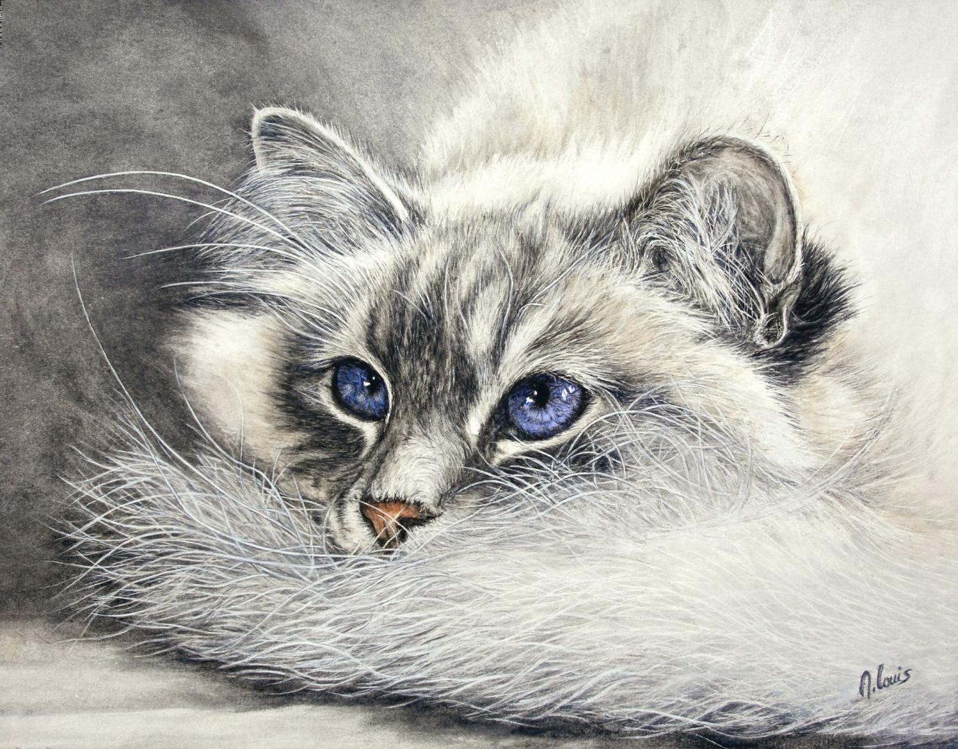 """Chat de Birmanie"" (40x50 cm)"