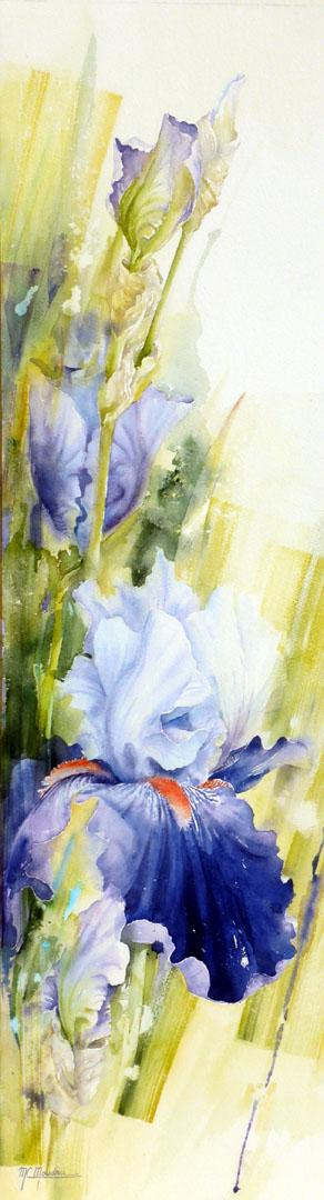 """""""Iris bleu"""""""